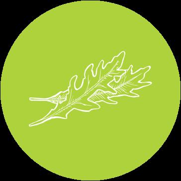 Salat & Dressings